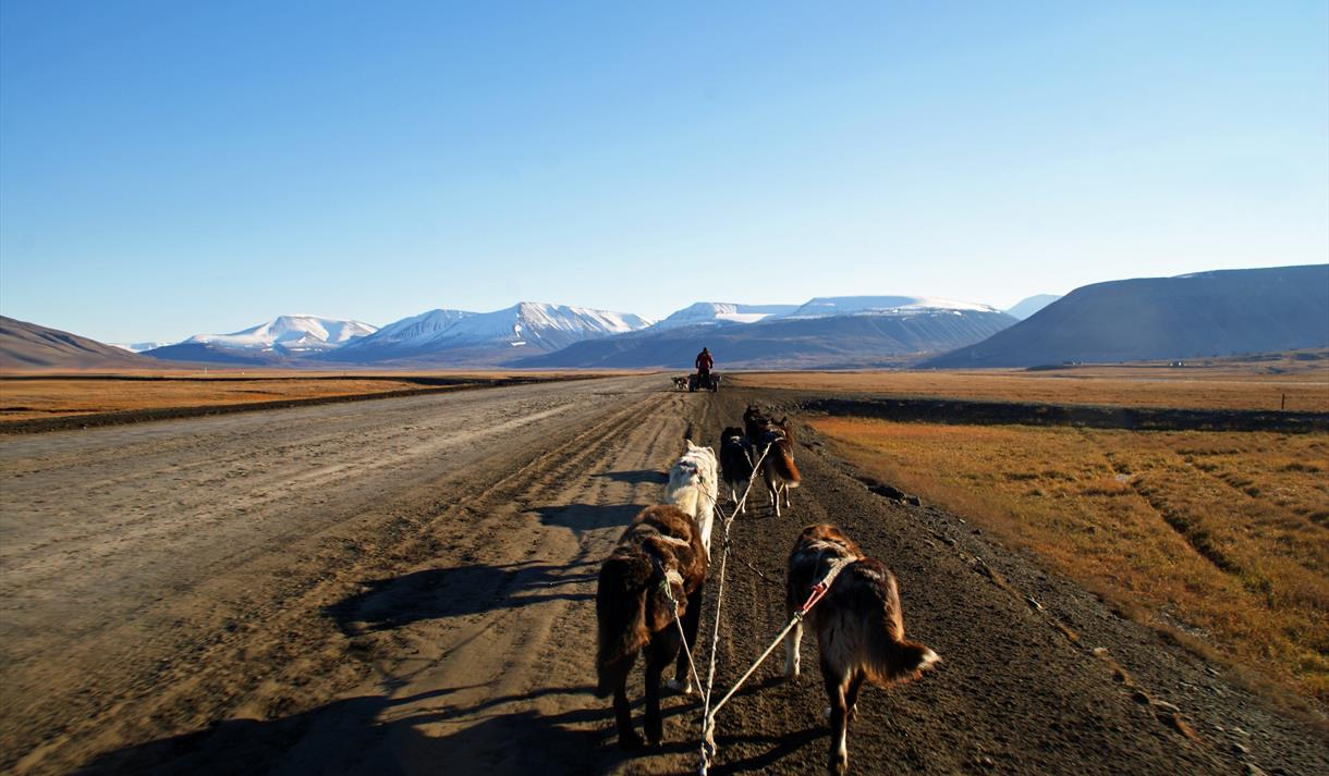 Explore dogsledding on wheels, enjoy lunch and tundra hiking