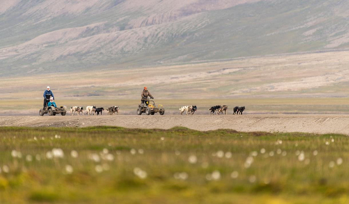 Dogs on wheels Svalbard