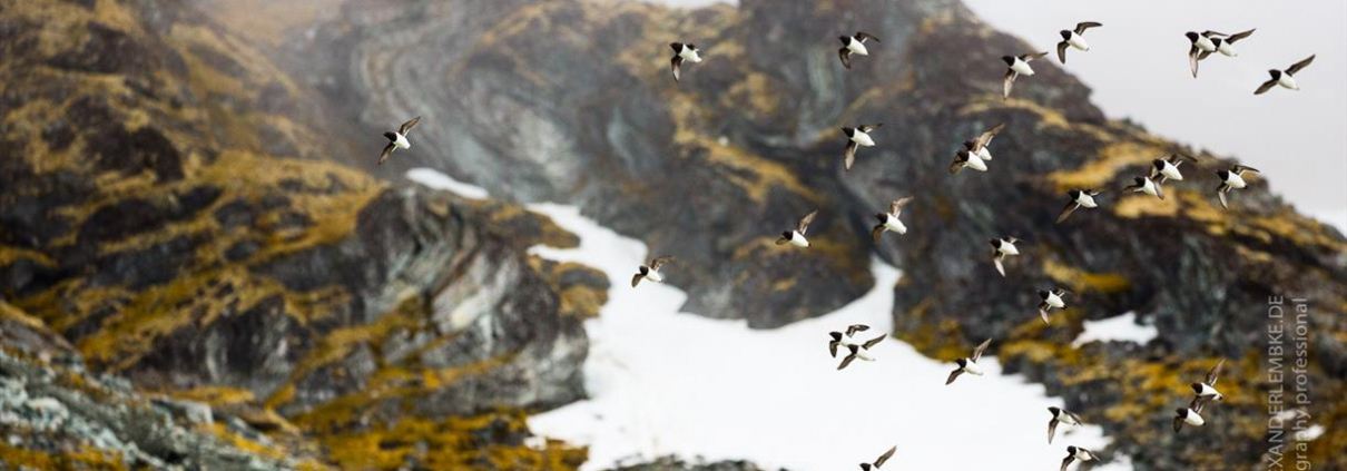Bird Spotting Excursion, followed by Arctic BBQ - Spitzbergen Adventures
